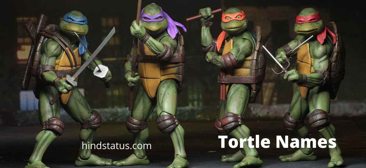 tortle names
